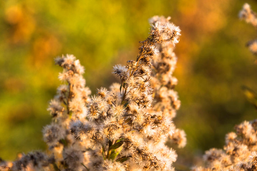 Fuzzy Bokeh by sequential