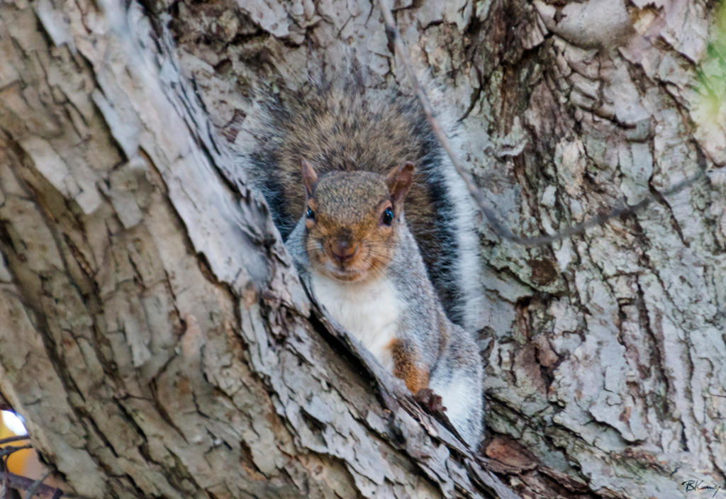 Goofy Squirrel by sequential