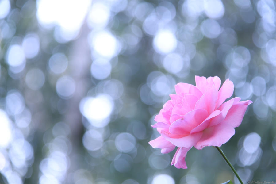 Winter Flower By Jsf Photography On Deviantart