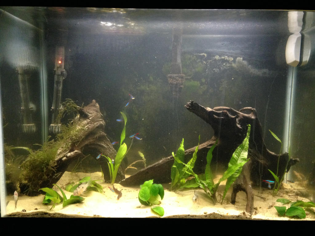 New Layout of my 20 gallon by DarkRedTigr