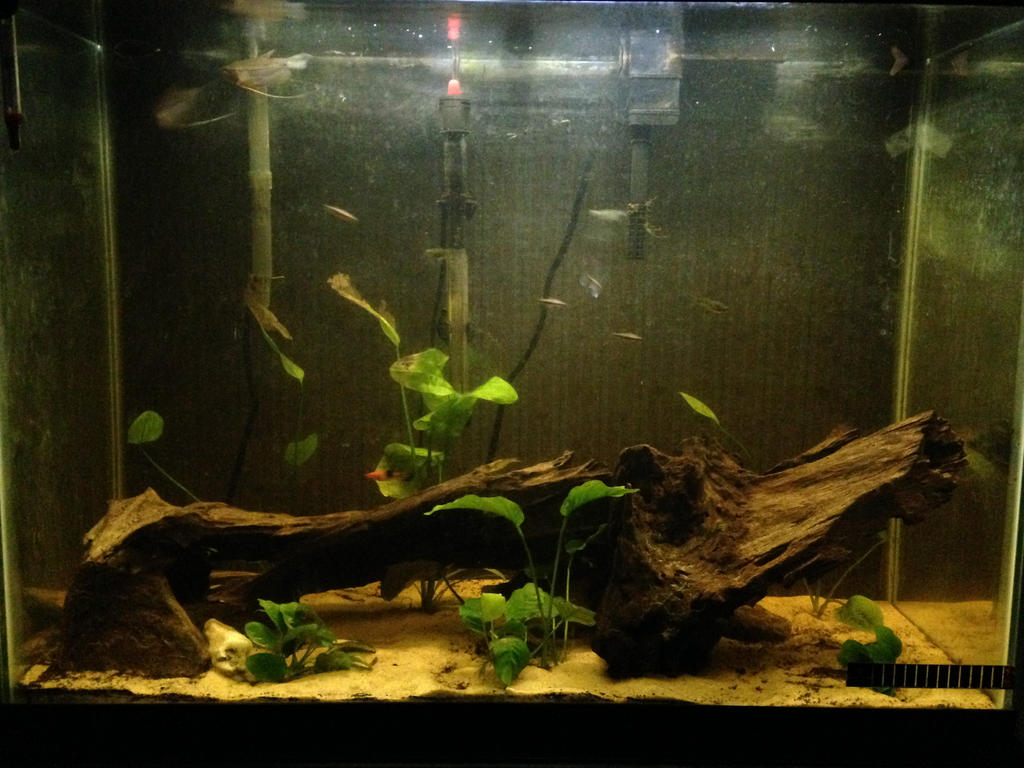 New layout of 37 Gallon by DarkRedTigr