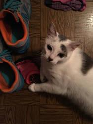 MMMMMMM Shoes Smell Nice by DarkRedTigr