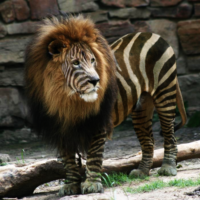 Animal Predators And Prey Libra - predator or prey  byAnimal Predators And Prey