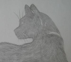 Cantilena-Cat's Profile Picture