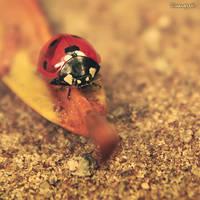 Ladybug by iMargreet