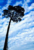Caricature of Tree and Cloudy