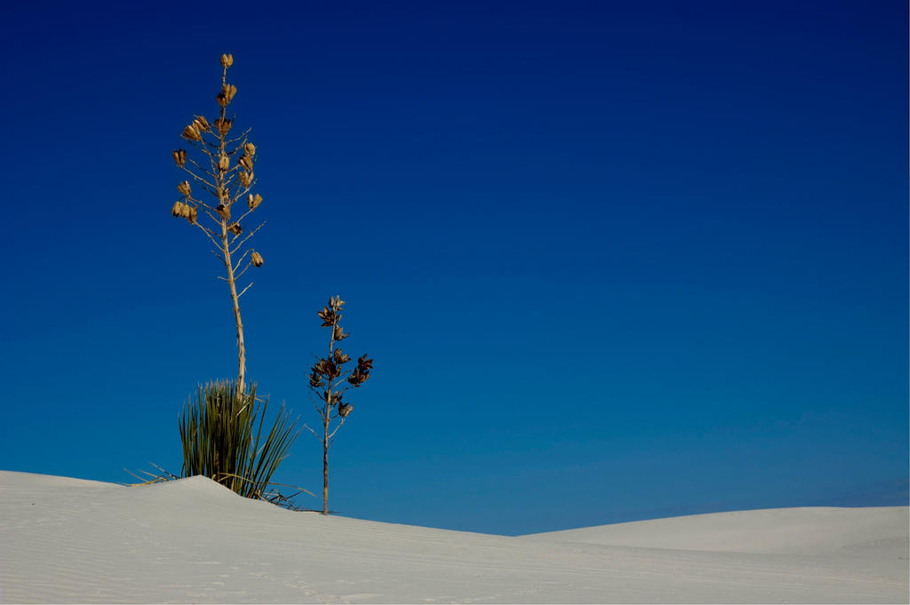 Blue Sky - White Sand by djohn9