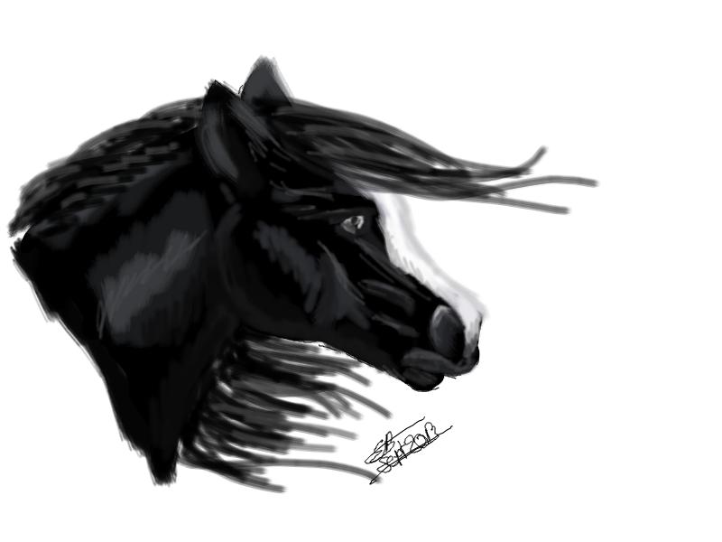 Black stallion by Liliandril