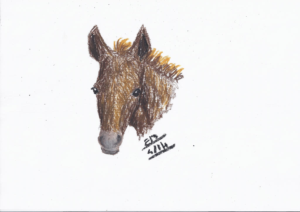 Petit Poulain ! Little Foal ! by Liliandril