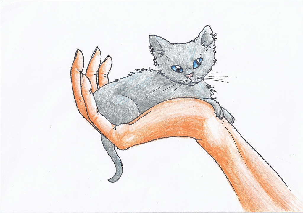 Little Grey Kitten with the Blue Eyes by Liliandril