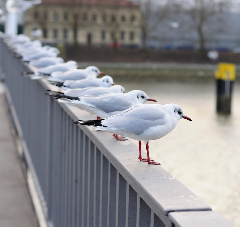 Seagulls by Vargson