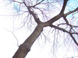 Bare Tree by OutsanityDotCom