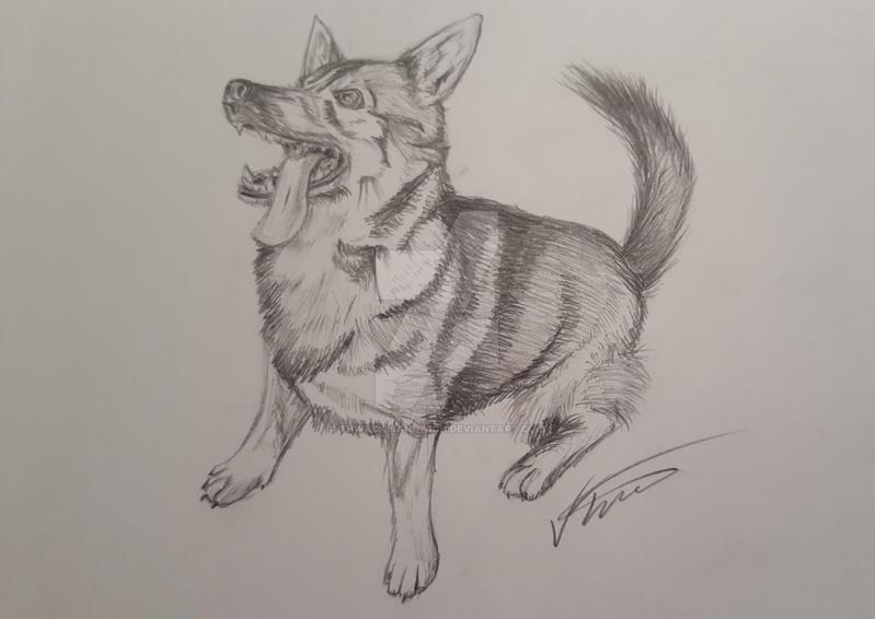 Swedish Vallhund Sketch by Thwack-Sandwich