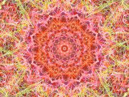 Fractal Thingy #2 - Lightning Rose