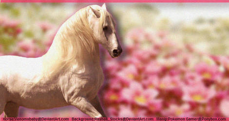Girly Horse Graphic