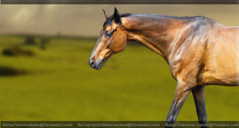 Thoroughbred in green pasture