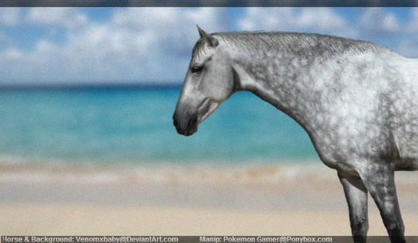 Dapple Grey at Beach