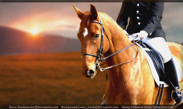 Horse with tack