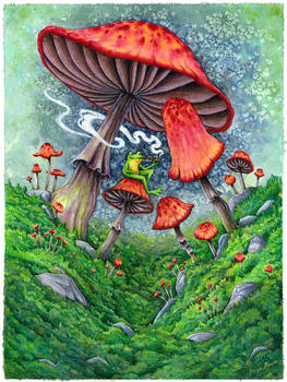 Mushrooms and a frog