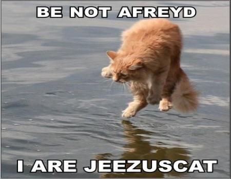 http://fc06.deviantart.com/fs42/f/2009/063/9/b/LOLcatz__jeezuscat_by_MuzicRkz.jpg