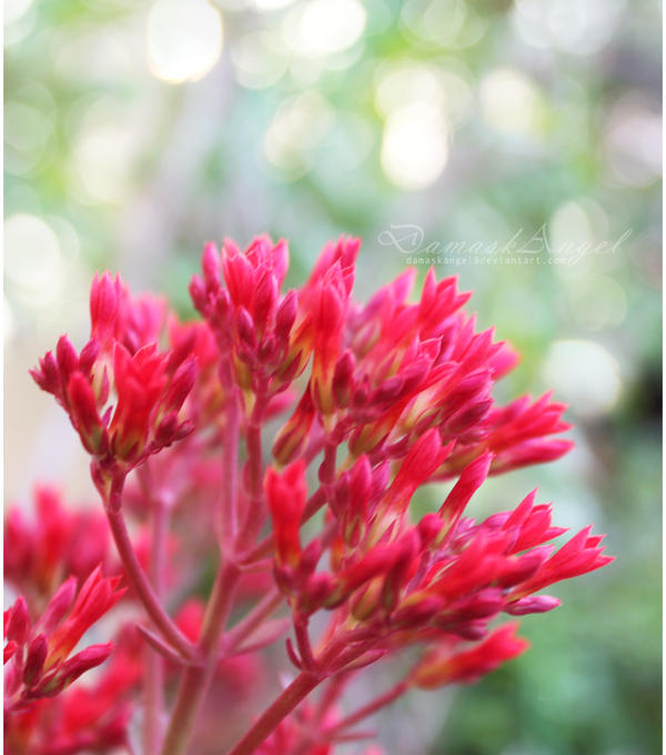 Blooms by damaskangel