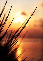 Silhouette by damaskangel