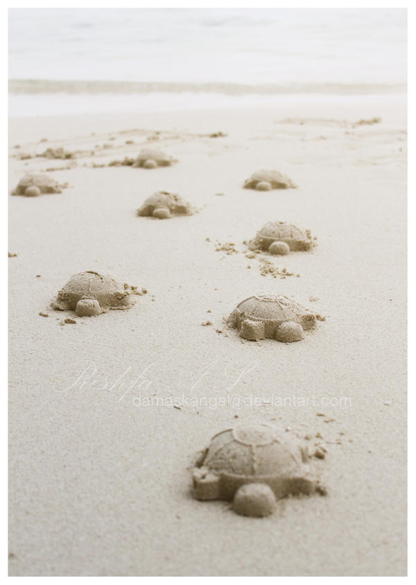Sand Turtles by damaskangel