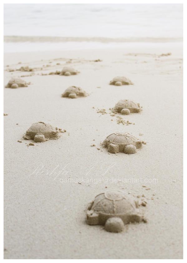 Sand Turtles by damaskangel