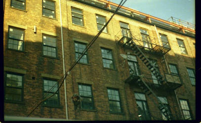 a_hanging_bear_in_brooklyn by abcdefblue