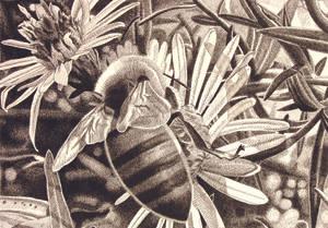 bee cross-hatching