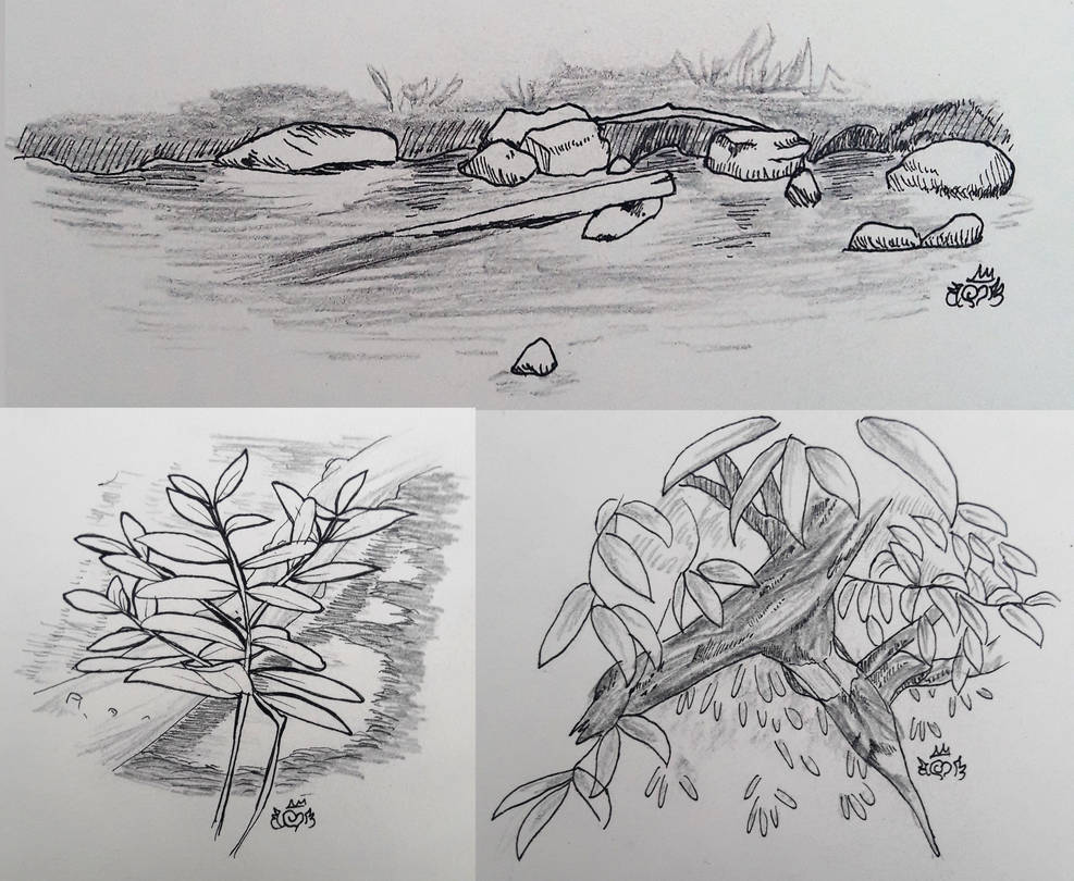 Nature drawings by xjunjox
