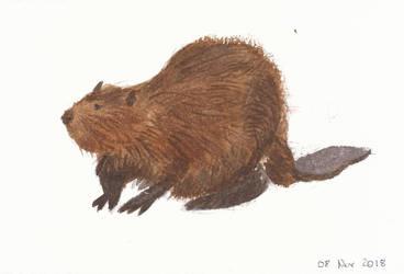 Beaver by Novembre17