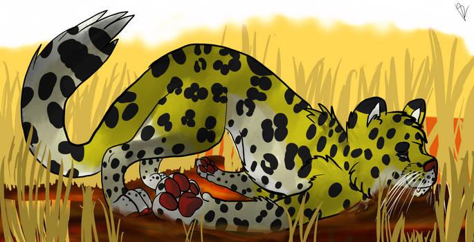 Leopard derps