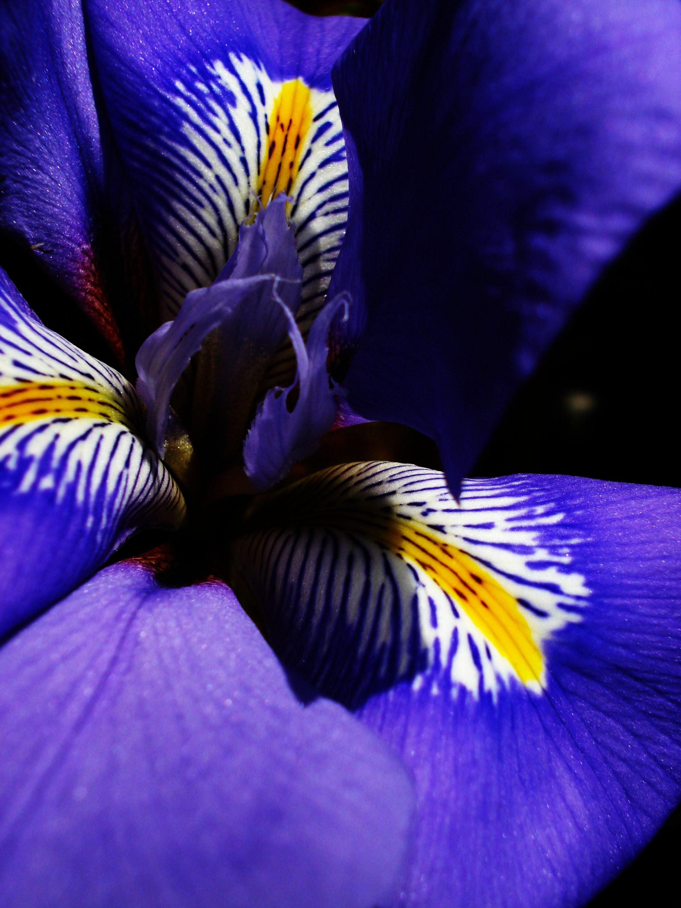 Purple Haze by cindyvalentine