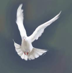 Dove - speedpainting by crystaleyes909