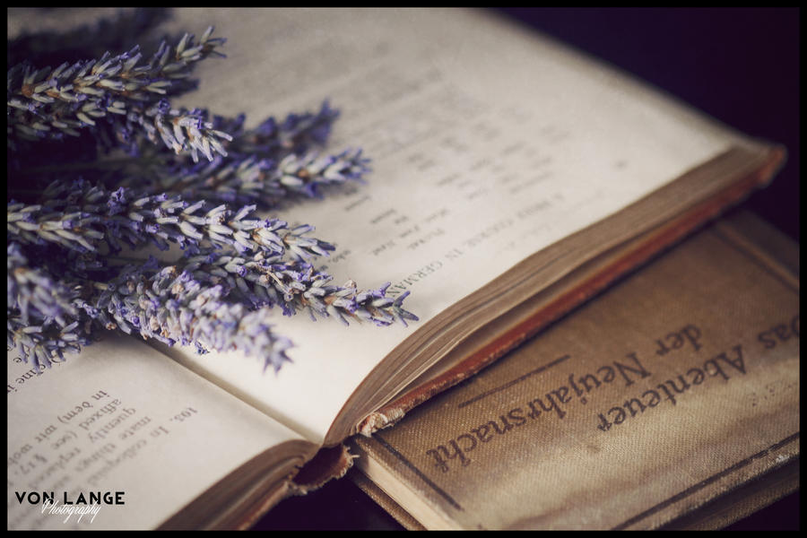 German and Lavender. by MRvLPhotography