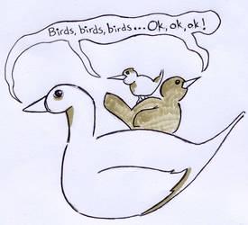 Day 13 (Birds)