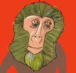 A New Monkey!