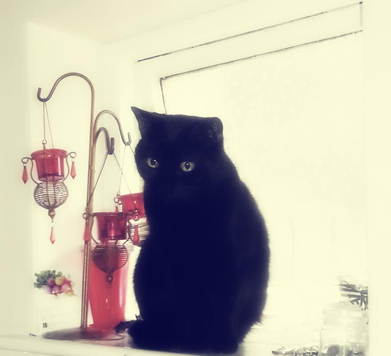 Black Cat Logo 4 by Solace-Grace