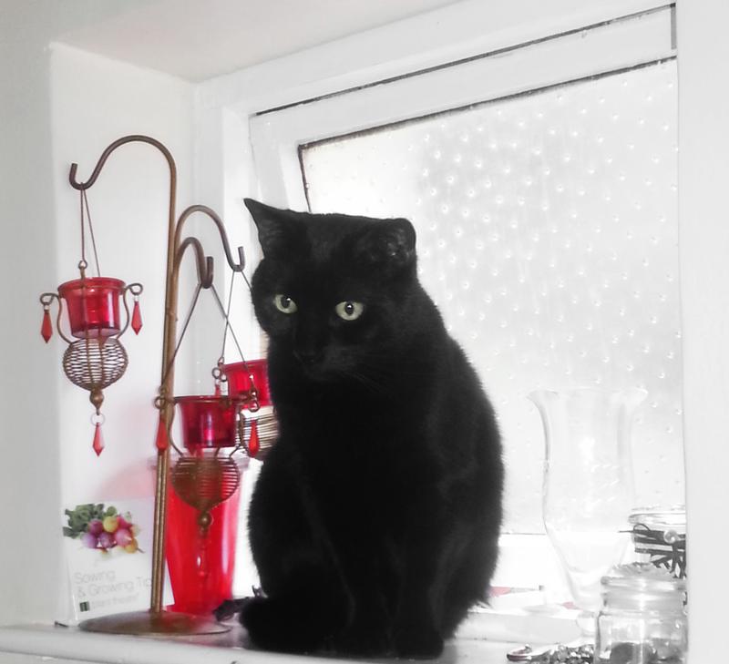 Black Cat Logo 5 by Solace-Grace