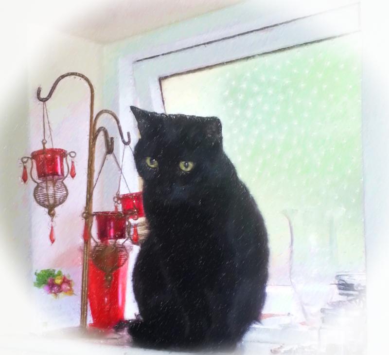 Black Cat Logo 6 by Solace-Grace