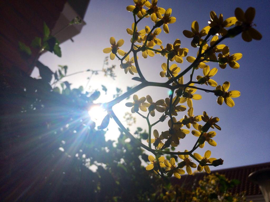 Sun flower by SoularWolf4
