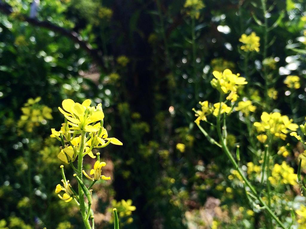 Garden flower by SoularWolf4