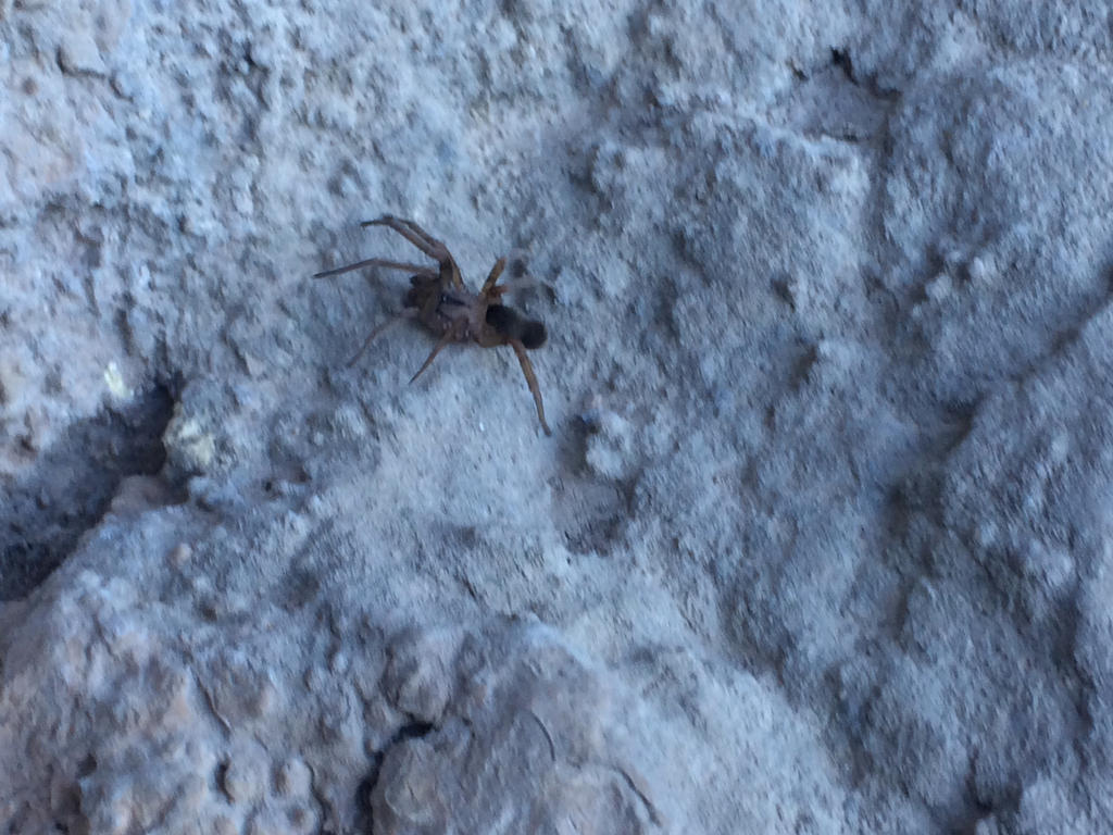 Cave spider 1/3 by SoularWolf4