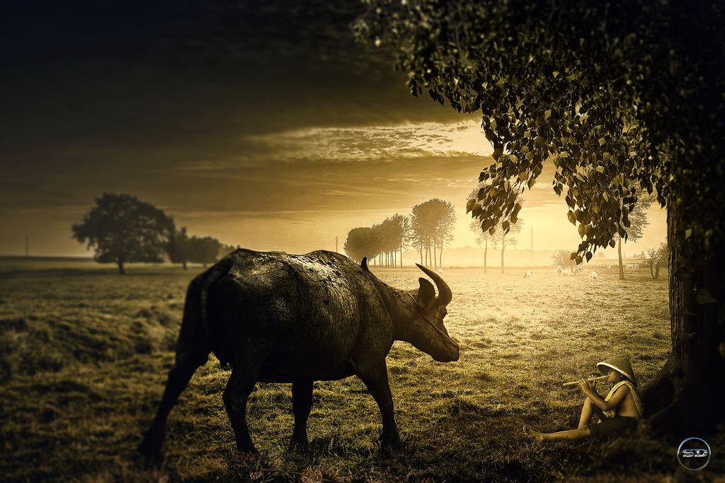 Lovely Buffalos