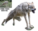 PNG- Wolf