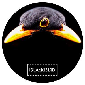l3LKl3iRd's Profile Picture
