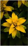 _yellow Star