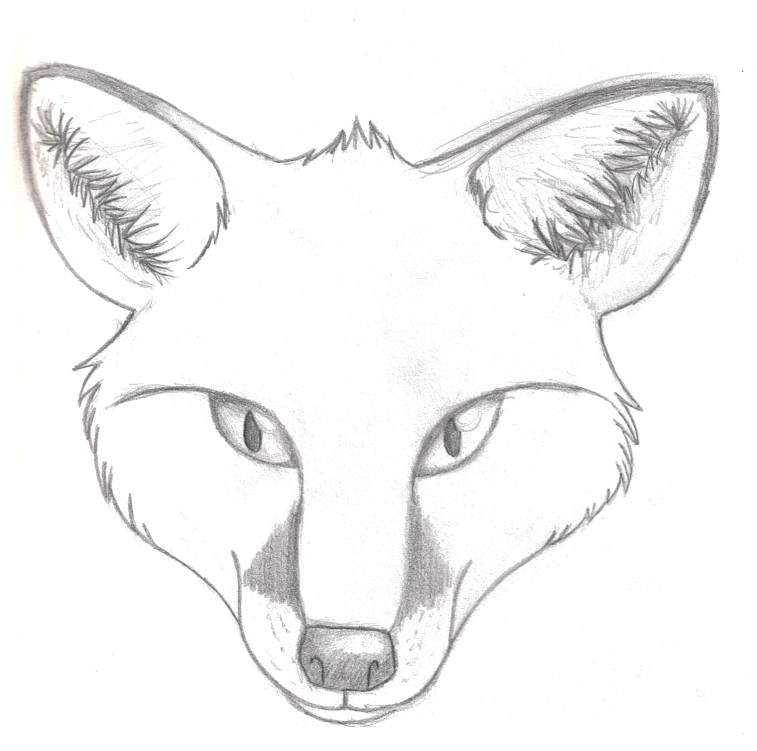 Fox Face Line Drawing : Realistic fox head by gabygalaxy on deviantart
