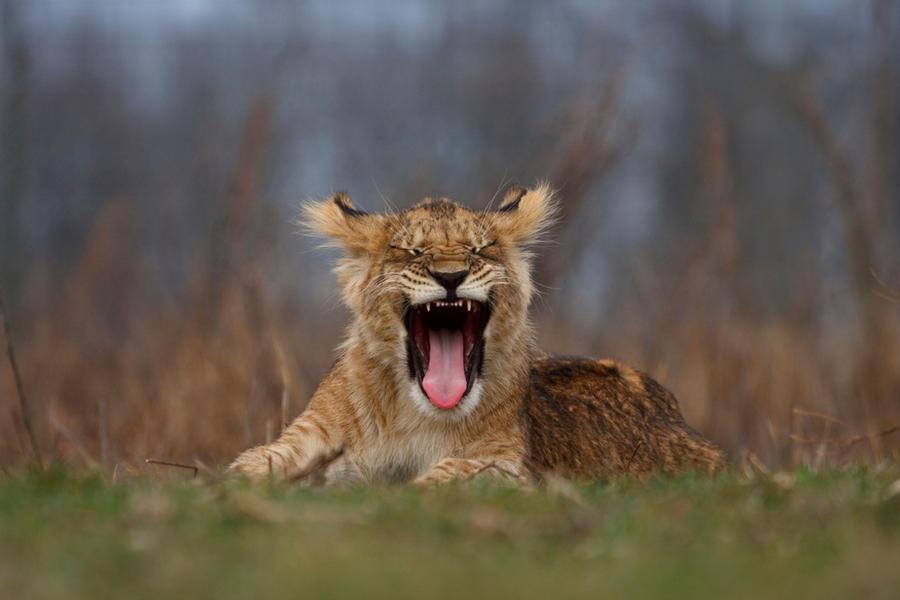 Yawn by Tygrik